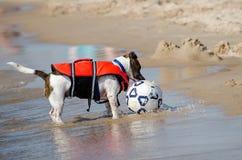 cane e sfera di calcio alla spiaggia Fotografia Stock Libera da Diritti