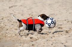 cane e sfera di calcio: Ho ottenuto il premio Immagine Stock