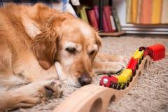Cane e treno Fotografia Stock