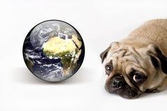 Cane ed il nostro mondo Immagine Stock Libera da Diritti