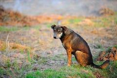 Cane esterno senza casa Fotografie Stock