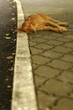 Cane esterno senza casa fotografia stock libera da diritti