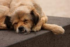 Cane esterno sulla via Fotografia Stock Libera da Diritti