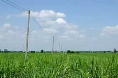 Cane farm. Mini electricity post in cane farm Stock Photos