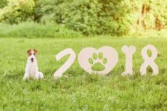 Cane felice adorabile del fox terrier al parco un greetin di 2018 nuovi anni Fotografia Stock Libera da Diritti