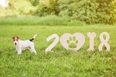 Cane felice adorabile del fox terrier al parco un greetin di 2018 nuovi anni Immagini Stock