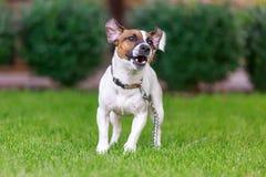 Cane felice che gioca fuori, Immagine Stock