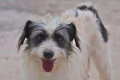 Cane felice che guarda alla macchina fotografica Fotografia Stock