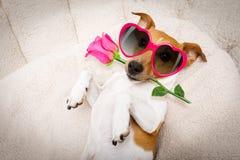 Cane felice dei biglietti di S. Valentino immagini stock libere da diritti