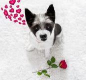 Cane felice dei biglietti di S. Valentino fotografie stock
