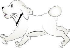 Cane felice del bichon del cucciolo illustrazione vettoriale