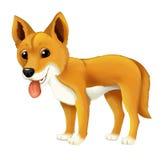 Cane felice del fumetto e divertente animale del dingo Fotografie Stock Libere da Diritti
