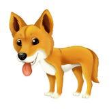 Cane felice del fumetto e divertente animale del dingo Fotografia Stock Libera da Diritti