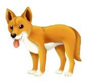 Cane felice del fumetto e divertente animale del dingo Immagine Stock