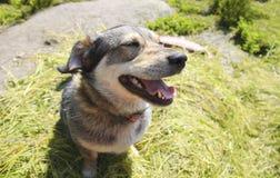 Cane felice divertente con la bocca aperta che si siede sull'erba Fotografia Stock Libera da Diritti