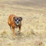 Cane felice in file fotografia stock libera da diritti