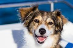 Cane felice su una barca fotografie stock
