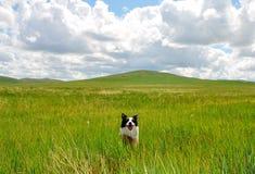 Cane felice sulla prateria Fotografie Stock