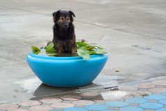 Cane felice in una grande ciotola dell'acqua fotografia stock libera da diritti