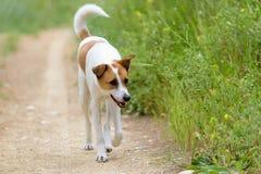 Cane femminile che cammina lungo la pista Immagini Stock Libere da Diritti