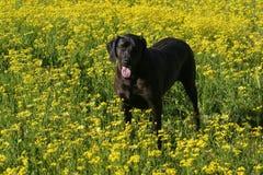 Cane in fiori del campo immagine stock