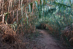 Cane and footpath Stock Photography