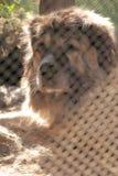 Cane in gabbia Immagine Stock Libera da Diritti