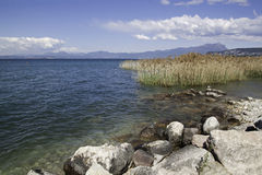 Cane in Garda lake, Italy Royalty Free Stock Photography
