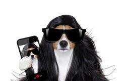Cane governare ai parrucchieri Fotografie Stock