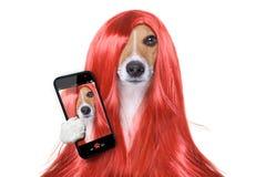 Cane governare ai parrucchieri Fotografie Stock Libere da Diritti