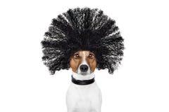 Cane governare ai parrucchieri Fotografia Stock Libera da Diritti