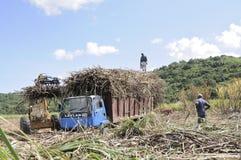 Cane harvest Royalty Free Stock Image