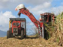 Cane harvest royalty free stock images