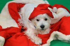Cane il Babbo Natale Immagini Stock Libere da Diritti