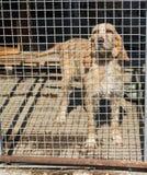 Cane ingabbiato sotto il sole Fotografie Stock Libere da Diritti
