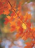 cane liście zdjęcia stock