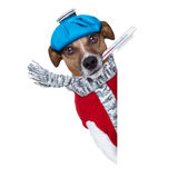 Cane malato con febbre Immagini Stock Libere da Diritti