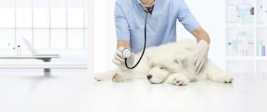 Cane malato dell'esame veterinario sulla tavola nella clinica del veterinario, mostrante immagini stock libere da diritti