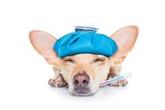 Cane malato malato Fotografia Stock Libera da Diritti