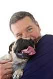 Cane maturo del Pug della holding dell'uomo, isolato Fotografia Stock Libera da Diritti