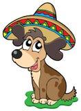 Cane messicano sveglio Immagine Stock