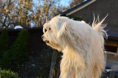 Cane Mixed della razza fotografia stock libera da diritti