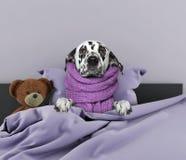 Cane molto ammalato fotografia stock