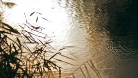 Cane Near River filme