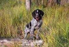 cane nel campo Immagine Stock