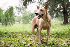 Cane nel legno Fotografia Stock