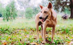 Cane nel legno tropicale verde Fotografia Stock