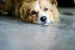 Cane nel Messico Fotografie Stock