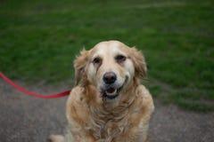 Cane nel parco immagini stock