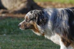 Cane nel parco della città immagini stock libere da diritti